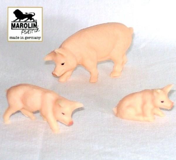 Hausschwein mit 2 Ferkel