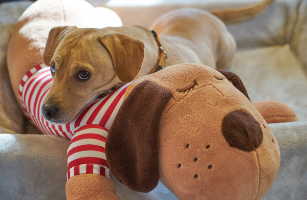 Hundespielzeug Kuschelkumpel Sammy